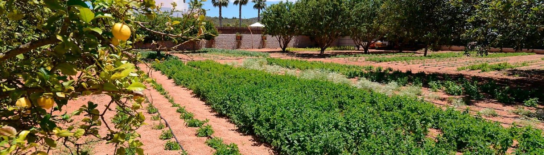 jardin2 1500x430 1